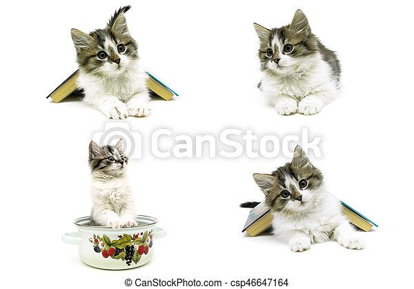 Hermosa gatita esponjosa aislada en el fondo blanco - csp46647164