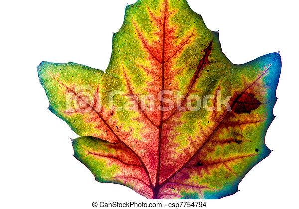 Hermoso, verano, hojas, color, otoño, indio.