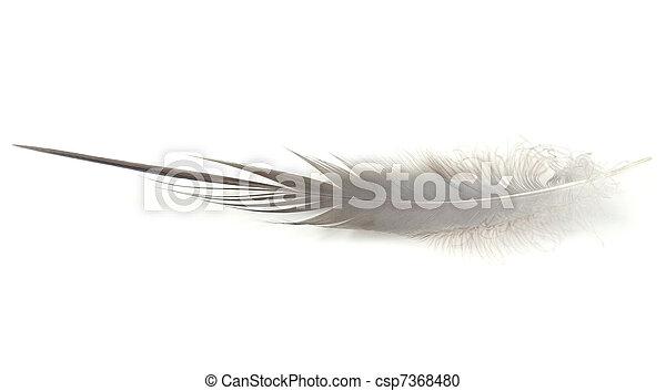 Heron Feather - csp7368480
