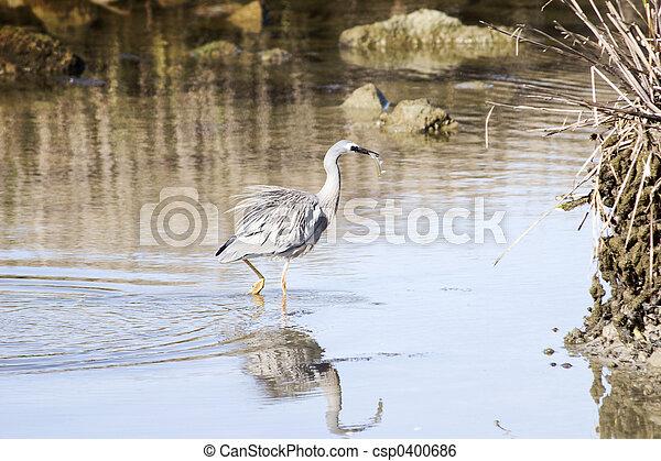Heron hunting 03 - csp0400686