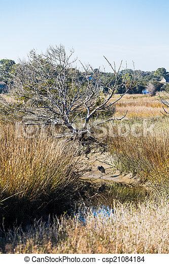 Heron in Creek Bed of Wetland Marsh - csp21084184