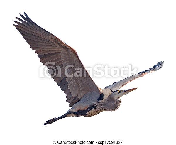 Heron - csp17591327
