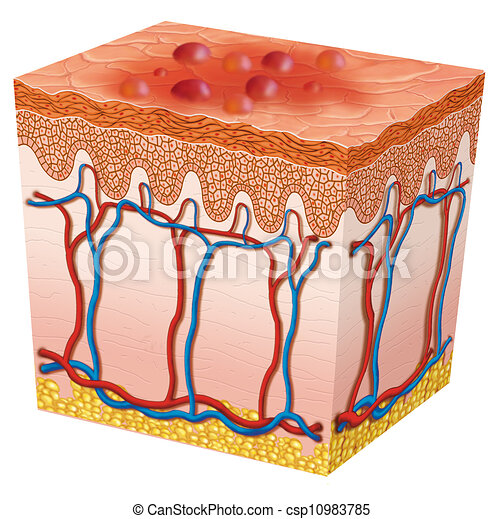 Best Herpes Illustrations, Royalty-Free Vector Graphics ...  Herpes Medical Illustration