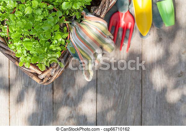 Herramientas de jardinería y semillas - csp66710162