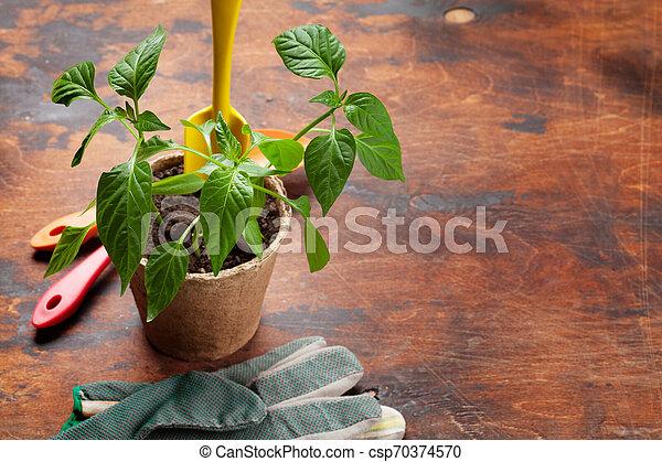 Herramientas de jardinería y semillas - csp70374570