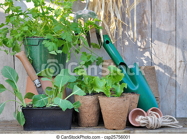 Semillas y herramientas - csp25756001