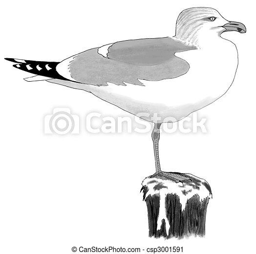 Herring Gull - csp3001591