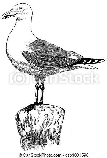 Herring Gull - csp3001596
