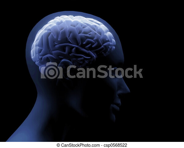 hersenen, transparant - csp0568522