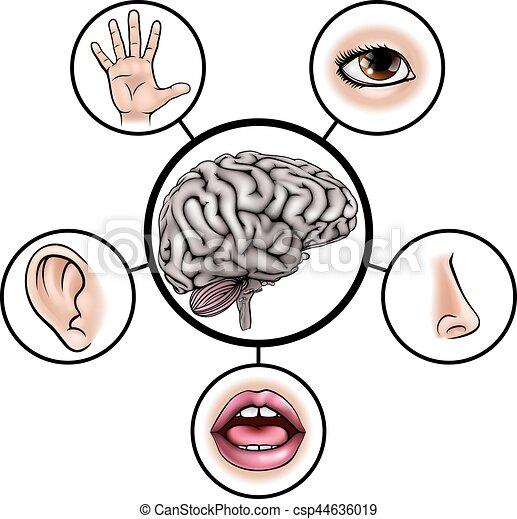 Hersenen Zintuigen Vijf Zintuigen Centraal Iconen