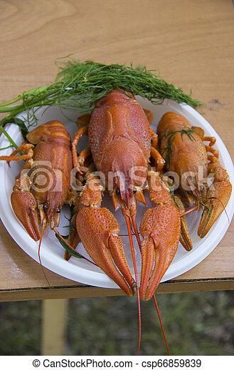 Un cangrejo hervido en el plato. - csp66859839