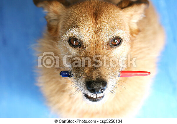 het kijken, pen, dog, op - csp5250184