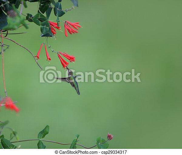 het zoemen, vogel - csp29334317