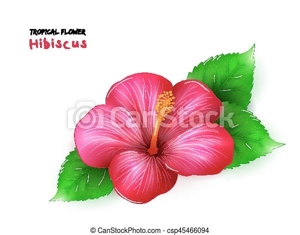 Hibisco Flor Hojas Aislado Ilustracion Tropical Realista