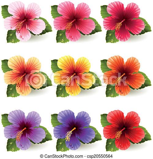 Hibiscus - csp20550564