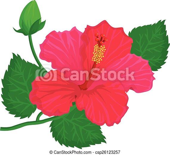 hibiscus - csp26123257
