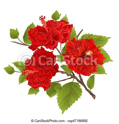 Hibiscus dessiner fleurs branche vendange main - Dessin d hibiscus ...