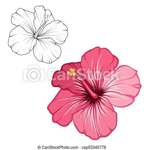 Hibiscus fleur rose macro isol fleurir rouges beau - Dessin d hibiscus ...