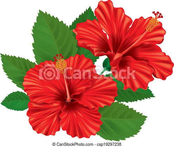 Hibiscus fleur hibiscus eps10 flower contient - Fleur d hibiscus dessin ...