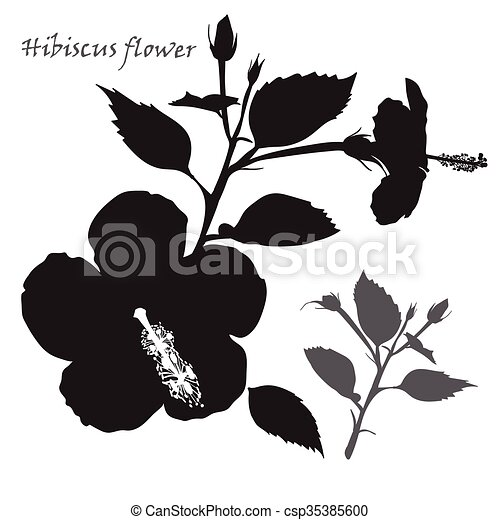 Hibiscus Flower Black Silhouette On White Background Hibiscus