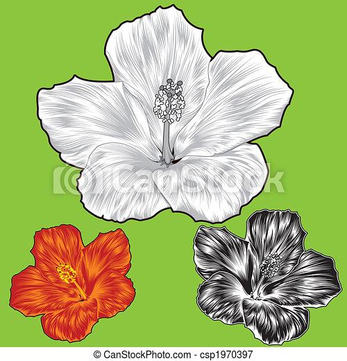 Hibiscus flower blossom variations - csp1970397