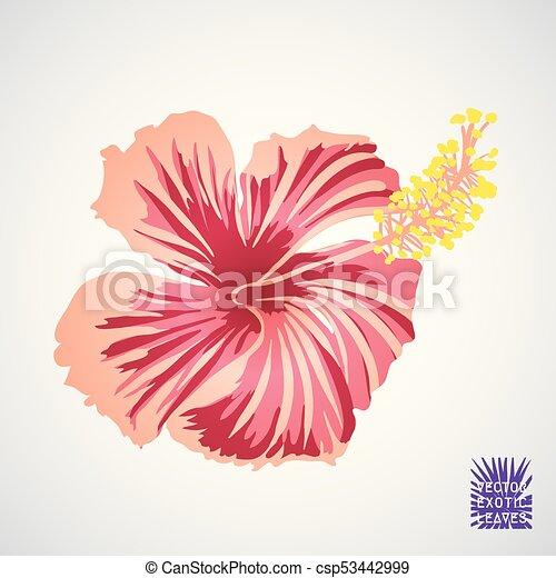 Hibiscus Flower In Pink Red And Yellow Hibiscus Flower In Pink Red