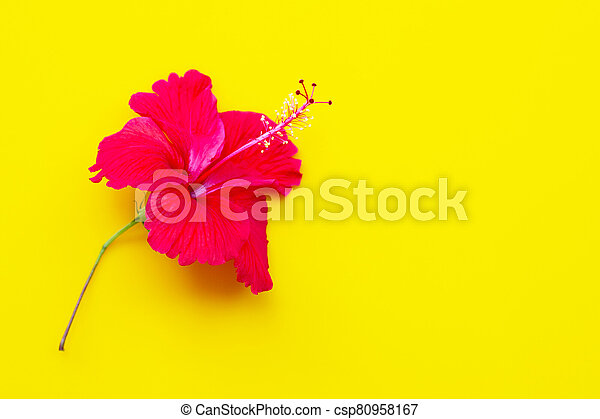 Hibiscus flower with leaves on yellow background. - csp80958167