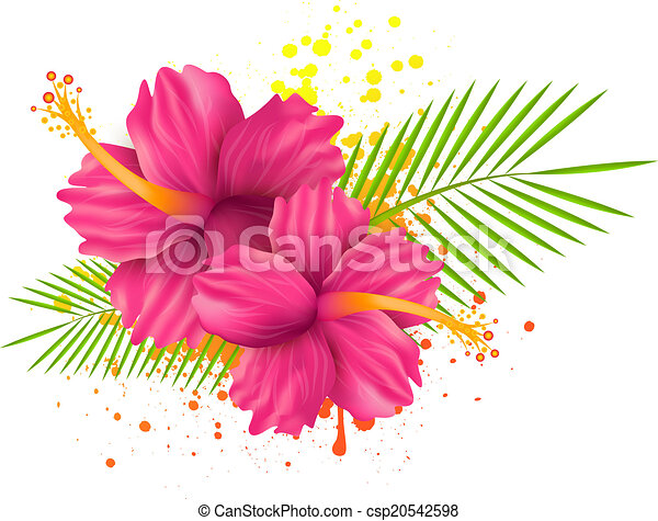 Hibiscus Flowers On Grunge Background Two Pink Hibiscus Flowers And