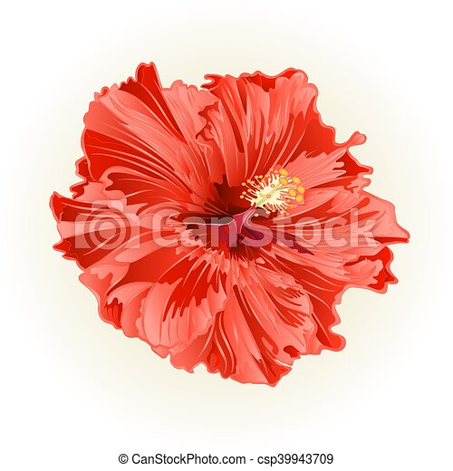 Hibiscus Salmon Color Simple Flower Vector Hibiscus Salmon Color Simple Tropical Flower Vintage Vector Illustration Canstock