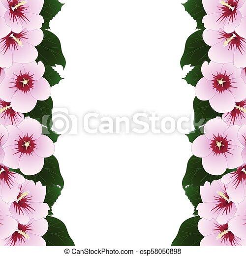 Hibiscus Syriacus Rose Of Sharon Border Vector Illustration