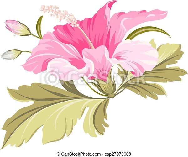 Hibiscus tropical flower. - csp27973608