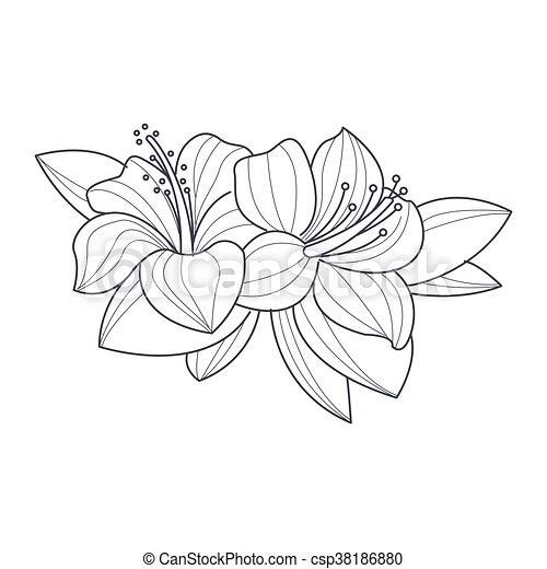 Hibiskus, farbton- buch, blume, monochrom, zeichnung. Hibiskus ...