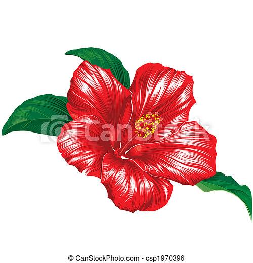 Hibiskus, weiße blume, roter hintergrund. Hibiskus, blüte ...