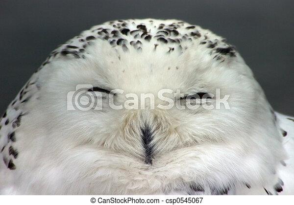 hibou, neige - csp0545067