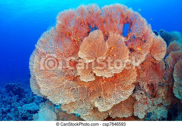 El coral de fans de Hickson - csp7846593