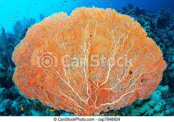 El coral de fans de Hickson - csp7846924