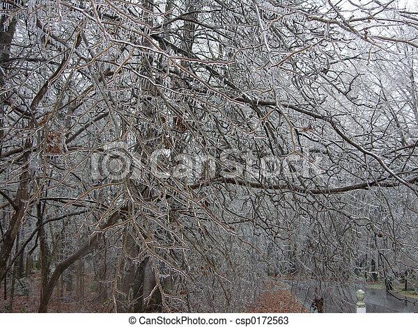 hielo, árboles - csp0172563