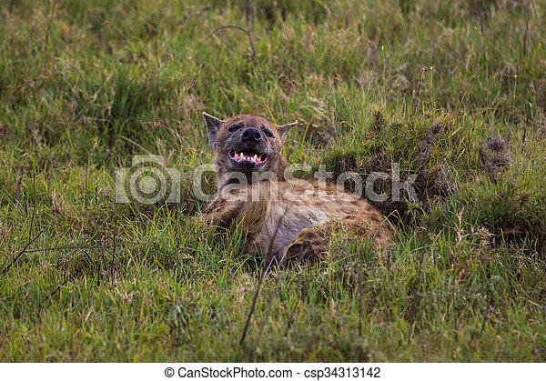 Una hiena manchada en la hierba - csp34313142