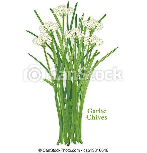 El ajo rechina hierba - csp13816646