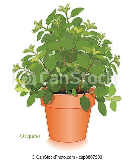 hierba, maceta, orégano, italiano. planta, utilizado, vectores