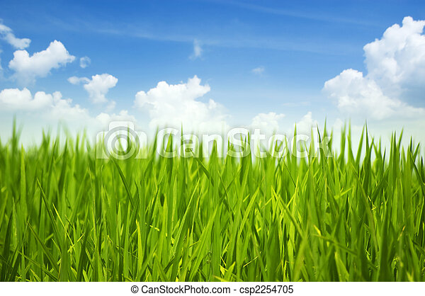 Hierba verde y cielo - csp2254705