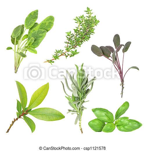 Herbs - csp1121578