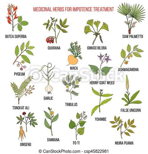 hierbas medicinales para la impotencia