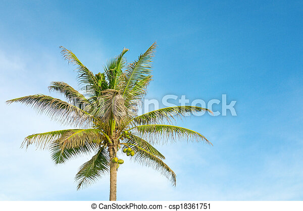 high palm on background of blue sky - csp18361751