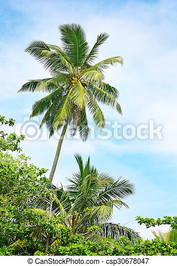 high palm on background of blue sky - csp30678047