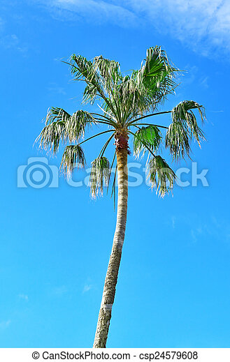 high palm on background of blue sky - csp24579608