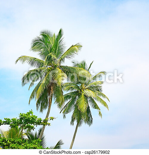 high palm on background of blue sky - csp26179902