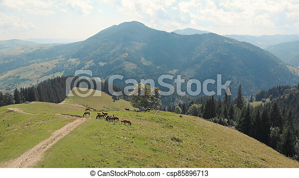 High place in the mountain with horses. - csp85896713