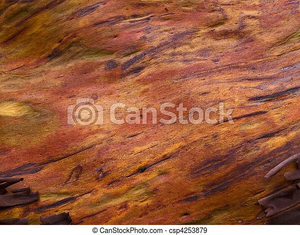 High Resolution Arbutus Tree Textur - csp4253879