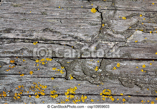 High Resolution Old Natural Wood Textures - csp10959603